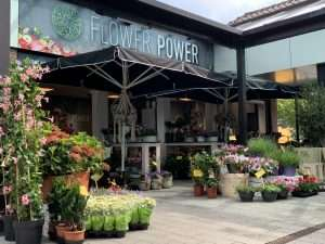 Flower Power Volendam
